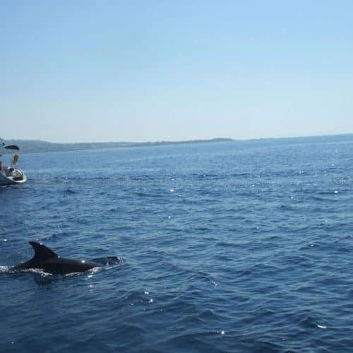 Dolphins spotted in Lixouri bay while sailing