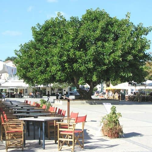 Lixouri square only a 2 min stroll from our yacht base