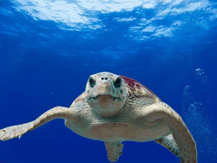 Discover sea turtles on a flotilla sailing holiday