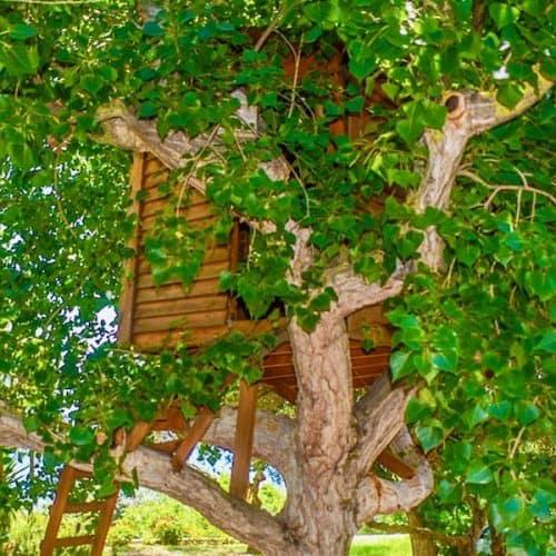 Nisos Beach House Treehouse