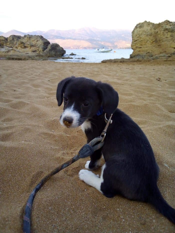 Our Lucky Beach Club Puppy in Greece!